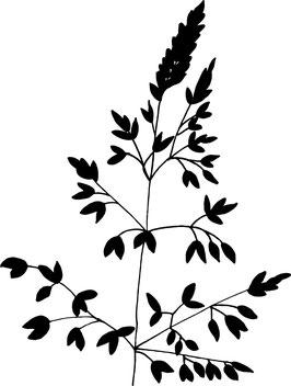 Knäuelgras