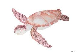 Poster - Shanti Schildkröte