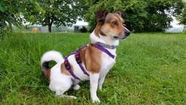 SICHERHEITSGESCHIRR SMALL: 20 mm Gurtband Breite für kleine Hunde