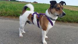 SICHERHEITSGESCHIRR EXTRA SMALL:  15 mm Gurtband Breite für kleinere Hunde