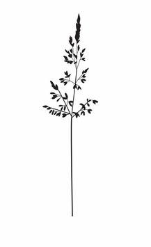 Gras Rispe medium