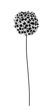 Allium (Sternenblume) groß