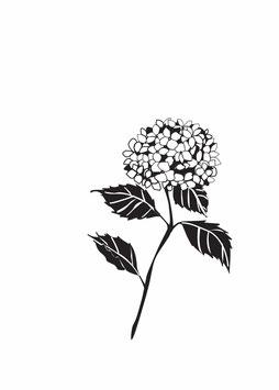 Hortensienzweig schwarz medium