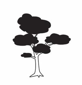 Baum KIEFER maxi