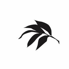 Pfingstrosen-Blatt medium