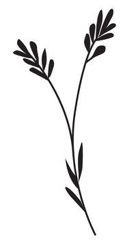 Lavendel klassisch maxi