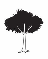 Baum WEIDE