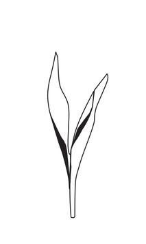 Tulpen-Blätter weiß medium