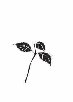 Hortensienzweig mit Blättern