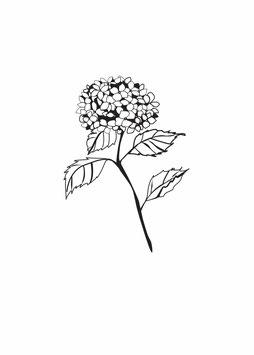 Hortensienzweig weiß medium