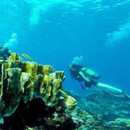 Scuba Diver for Beginners