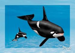authentic-CARD - Orca