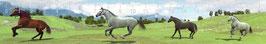 authentic Ruler - Galopierende Wildpferde