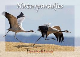 authentic CARD - Naturparadies Deutschland (Kranich-Paar)
