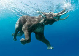 authentic-CARD - schwimmender Elefant