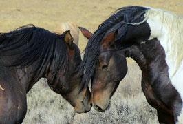 Verlatingsangst paard
