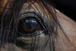 Stress paard