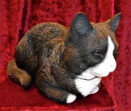 Katze träumend Schwarz-Weiss
