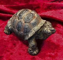 (2) Schildkröte Dunkelbraun