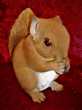 (1) Eichhörnchen Baby