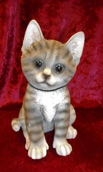(5) Kätzchen sitzend Grau