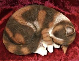(17) Katze schlafend Braun-Weiss gefleckt