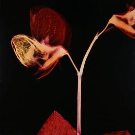 Angelika Krinzinger - Leaves (Kunst / artwork) 2003