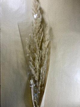 Bund Wildgras beige