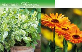 La Purezza VEGETALE für Pflanzen