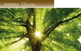 La Purezza VEGETALE für Bäume
