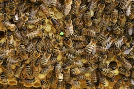 Bienenvolk - Zandermaß