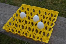 Eieraufbewahrung