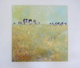 Kühe auf Weide/Mohnblumen