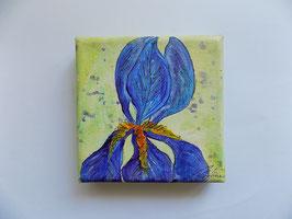 "Minis - ""Iris blau"""
