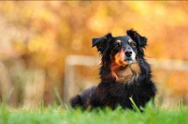 Einzelstunde Hundeplatz