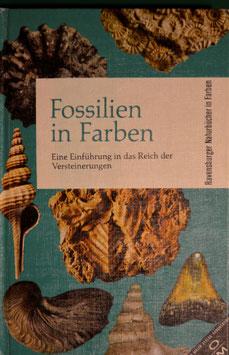 Fossilien in Farben