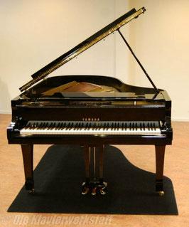 Pianocarpet, Flügel bis 173 cm Länge