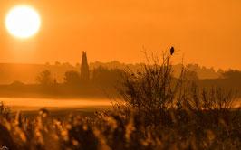 Tirage d'Art | Lever de soleil & Réveil du Faucon