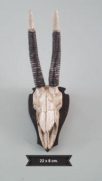 schedel polystone