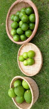 柑橘の王国シリーズ     ライム、青レモン、カボス 3種の饗宴セット