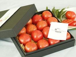 kitachi ROSSO 化粧箱入り 1.0kg/塩熟トマト/トマト