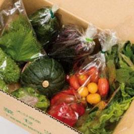 下郷農協の旬の野菜8品目 有機栽培野菜 野菜宅配