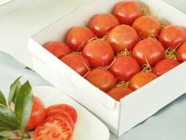塩熟トマト 糖度10 白箱入り 1.0kg/塩熟トマト/トマト