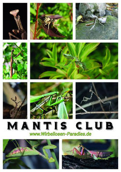 Mantis Club Poster