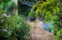 Carex pendula / Riesen Segge