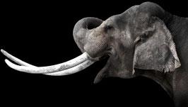 "Wallpaper ""Elefant #2"""