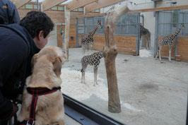 In und um den Opel-Zoo
