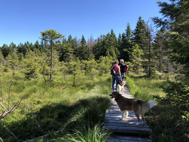 Harz - die sagenumwobene Bergwildnis