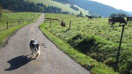Von Sauerthal zur Grube Glück-auf