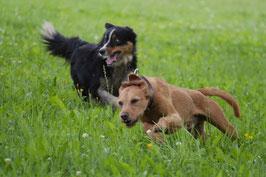 Seminar: Hundebegegnungen